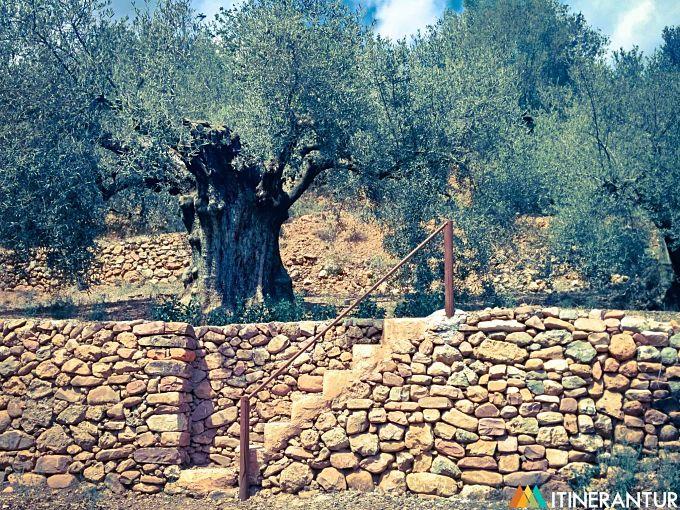 artana olivera del rico_opt (2)